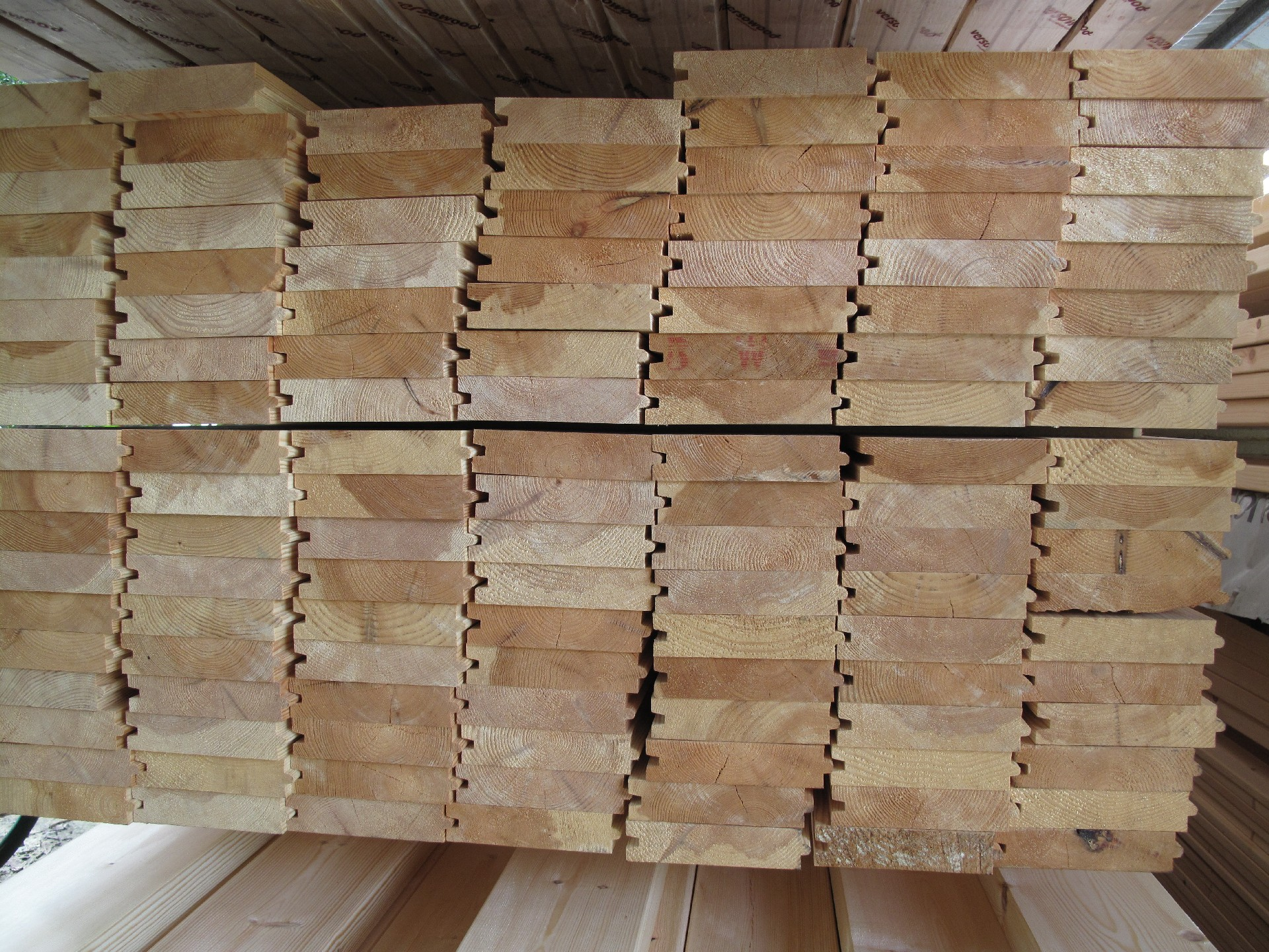 עץ גלריה אורן