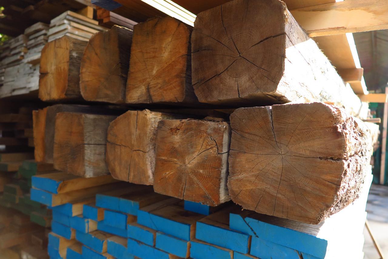 עץ גושני עתיק